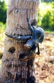 Another land crab on a tree