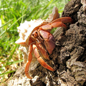 A hermit crab on a tree